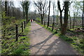SO6413 : Cycle track near Ruspidge by Philip Halling