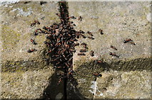 SO6210 : Wood ants by Philip Halling