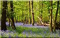 SU7579 : Path through the bluebells in High Wood, Mays Green, Oxfordshire by Edmund Shaw