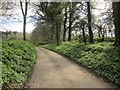 SE2966 : Ripon Rowel Walk near Ingerthorpe Hall by Derek Harper