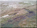NY2932 : Evidence of Motorbike Usage by Mick Garratt