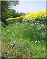 TG3726 : Wild flowers growing beside roadside ditch by Evelyn Simak