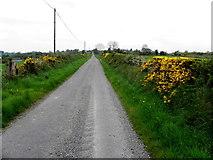 H7580 : New Road, Muntober by Kenneth  Allen
