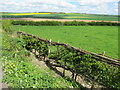 SE9259 : New  layed  hedge  and  a  Yorkshire  Wolds  view by Martin Dawes