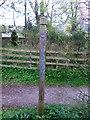 NO5298 : A 'Deeside Way' marker post by Stanley Howe