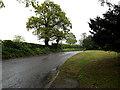 TM3992 : Yarmouth Road, Geldeston by Geographer