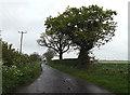 TM4394 : Wood Lane, Waterheath by Adrian Cable