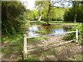 SU2517 : Nomansland, village pond by Mike Faherty