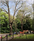 SX9164 : Tree surgery, Lymington Road, Torquay by Derek Harper