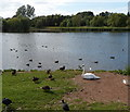 ST4769 : Waterfowl on and near Backwell Lake  by Jaggery
