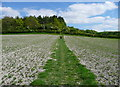 TL1230 : The Chiltern Way crossing a field by Humphrey Bolton