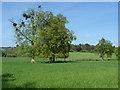 SU9747 : Loseley Park farmland by Alan Hunt