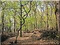 SX7172 : Grey Park Wood by Derek Harper