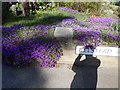 TM1543 : Purple flowers on Belstead Road by Hamish Griffin