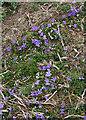 NM4684 : Violets by Anne Burgess