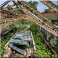 TL8160 : Derelict greenhouse, Ickworth Park by David P Howard