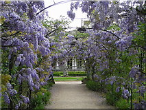 TQ2274 : Wisteria arbour, Grove House by Mark Percy