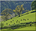 SN8797 : Cattle on the hill by Nigel Brown