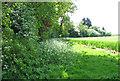 TF9829 : Cow parsley on field margin by Evelyn Simak