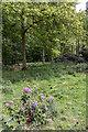 TL4300 : Beech Trees, near Copped Hall, Essex by Christine Matthews