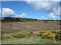 NG4735 : Clear-felling in Glen Varragill Forest by Trevor Littlewood