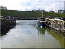 C9242 : Harbour at Portballintrae by Kenneth  Allen