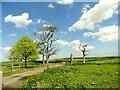 NZ1856 : Trees beside Barcusclose Lane by Robert Graham