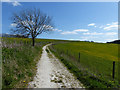 SU8417 : South Downs Way looking east by Chris Gunns