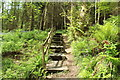 NX0881 : Wooden Steps in Smyrton Wood by Billy McCrorie
