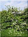 SJ4348 : Overgrown Fingerpost near Shocklach by Jeff Buck
