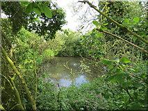 SE9746 : Horse  Keld  Pond  hidden  among  trees by Martin Dawes
