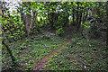 SO8854 : Wychavon : Path by Lewis Clarke