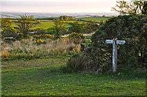SS8429 : North Devon : Exmoor - Woodland Common by Lewis Clarke