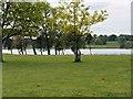SJ7580 : Tatton Park, Tatton Mere by David Dixon