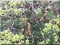 NR3451 : Gnarled oak tree by M J Richardson