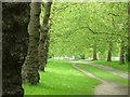 TQ2874 : Clapham Common by Stephen McKay