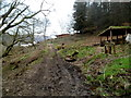 ST2091 : Muddy track up from Nant Hafod-tudur near Wattsville by Jaggery