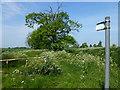 TL4778 : Footpath near College Farm, Wentworth by Richard Humphrey