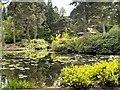SJ7481 : Golden Brook by David Dixon
