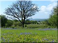ST1699 : Bluebells and Buttercups, Aberbargoed Grasslands by Robin Drayton