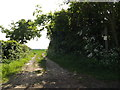 TM4388 : Bridleway off Cucumber Lane by Adrian Cable