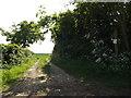 TM4388 : Bridleway off Cucumber Lane by Geographer