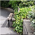 SJ9295 : Ivy covered bench in Victoria Park by Gerald England
