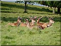 SJ7579 : Tatton Deer Park by David Dixon