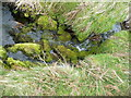 NY4821 : Mossy Beck by Michael Graham