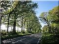SX3572 : Launceston Road by Derek Harper