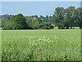 SU9846 : View towards Mount Browne by Alan Hunt