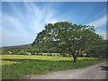 SD6869 : Oak tree, Ridding Lane by Karl and Ali