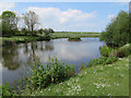 TA1872 : Buckton duck pond by Pauline E
