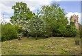 SP5141 : Thenford Arboretum by David P Howard